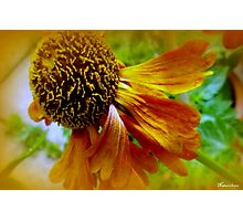 An Old Flame Photographic Print