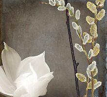 India White Magnolia by mindydidit