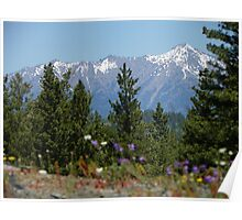 Wildflowers and Elkhorns Poster