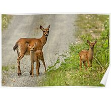 FAWNS Poster
