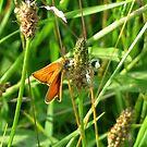 Little Orange by ienemien