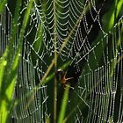 A Spider, Web, and Morning Dew by swaby