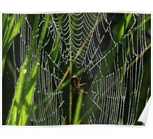 A Spider, Web, and Morning Dew Poster