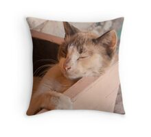 Cat in a box 2 Throw Pillow