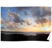 Monterey Bird Sunset - November 2010 Poster