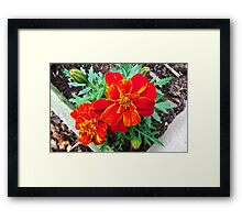 Yellow in Red Framed Print