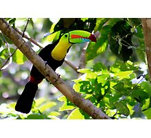 Keel-billed Toucan Photographic Print