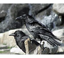 Raven Watchers Photographic Print
