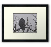Snowstorm Raven Framed Print