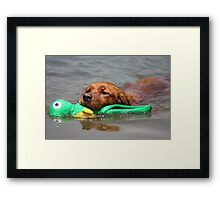 Penelope Fetching A Water Toy- 11 Framed Print