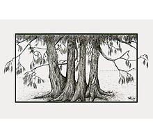 Linden Trees Photographic Print