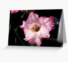 Pink Gladiola - CA-3  Greeting Card