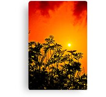 Red Cloud Sunset Canvas Print