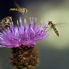 Hoverflies by Lifeware