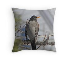 American robin in a tree Throw Pillow