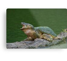 Holy Snapper! Metal Print