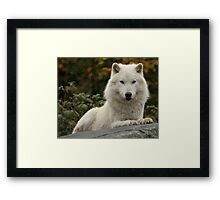 Prince of the forest Framed Print