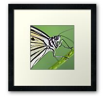 """""""Smiley"""" - A Paperkite Butterfly Framed Print"""