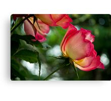 Dedicated To Fran Canvas Print