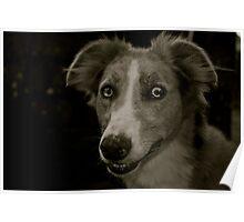 Brighteyes (Greyhound x Collie) Poster