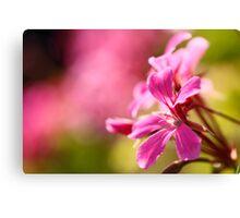 Pink garden flower Canvas Print