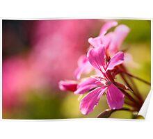 Pink garden flower Poster