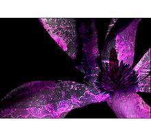 Steel Magnolia Photographic Print