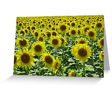 Field Full of Sunshine Greeting Card