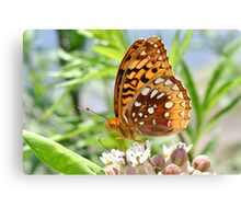 Great Spangled Fritillary. Canvas Print