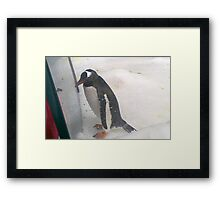 Mr Vain Framed Print