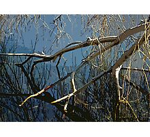 Swamped In The Waters Photographic Print