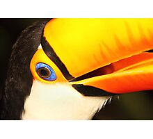 Detailed Portrait of a Toco Toucan at Iguassu, Brazil.  Photographic Print