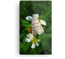 """So delightfully """"bella""""!  The beautiful Ornate Bella Moth Metal Print"""