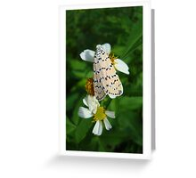 "So delightfully ""bella""!  The beautiful Ornate Bella Moth Greeting Card"