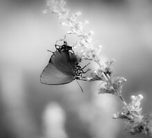 Poem for a Butterfly by Briar Richard