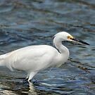 Egret by loiteke