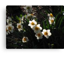 """Daffodils"" Canvas Print"
