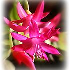 Cactus Flower by Tugela
