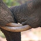 Entwined Tuskers by Jennifer Sumpton