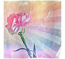 Pastel Carnation Poster