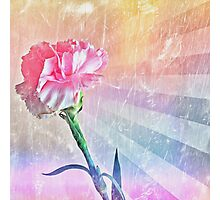 Pastel Carnation Photographic Print
