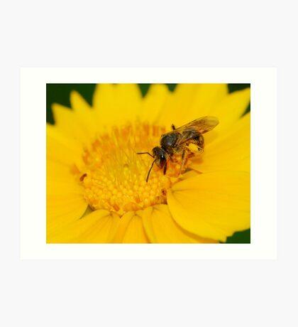 wasp and daisy Art Print