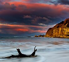Drift Wood - Point Addis Victoria by Graeme Buckland