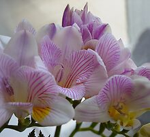 Scented Freesias by Sharon Brown