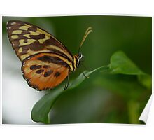 Orange, Yellow and Brown Butterfly Poster