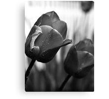 Monochrome Tulips Canvas Print