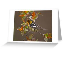Blackburnian Warbler Greeting Card