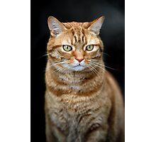 Random cat Photographic Print