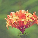 She's orange someday... by Kornrawiee