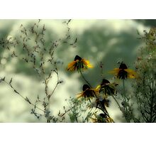 What Grows in the Wild Photographic Print
